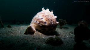 tioman-helmet-shell